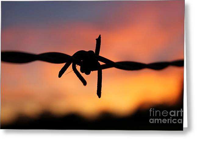 Greeting Card featuring the photograph Barbed Silhouette by Vicki Spindler