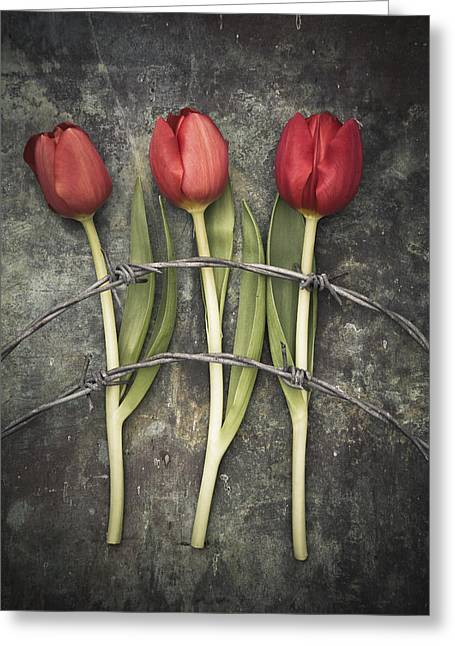 Barbed Wire And Tulip Greeting Card