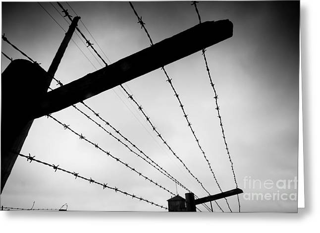 Barbed Wire Fence Greeting Card by Michal Bednarek