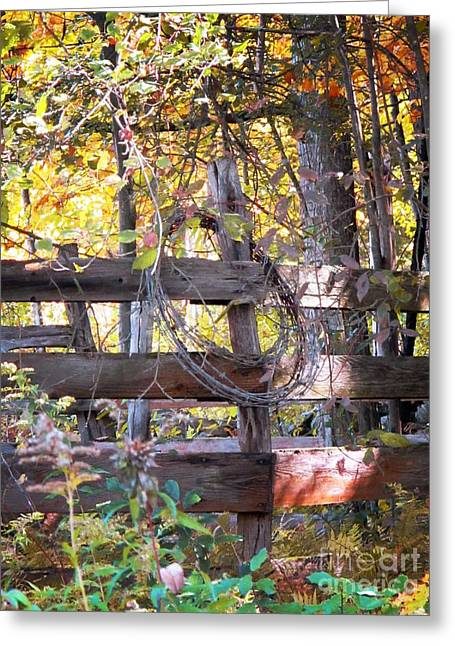 Barbed Wire On Fence Greeting Card by Linda Marcille