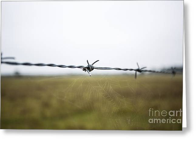 Barbed Wires Greeting Card by Mina Isaac