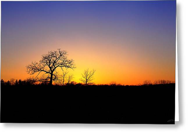 Bare Oak In Spring Sunset Greeting Card