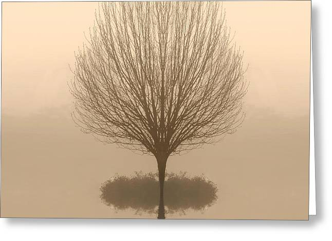 Bare Tree In Fog At Dawn Greeting Card by Cheryl Casey
