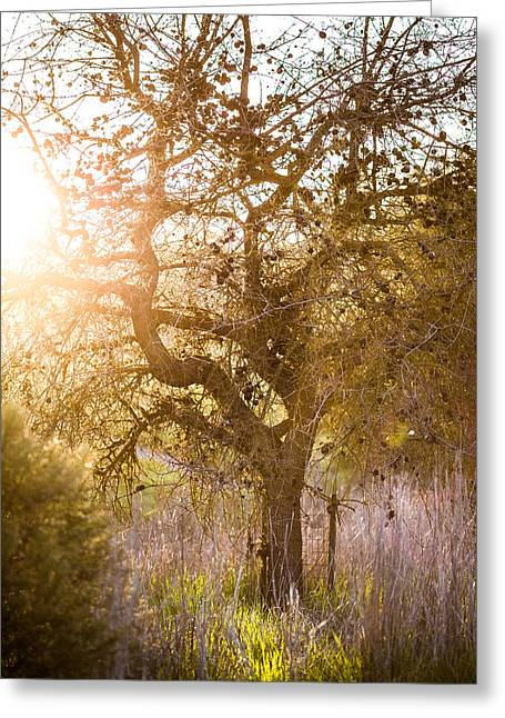 Bare Tree Greeting Card by Mike Lee