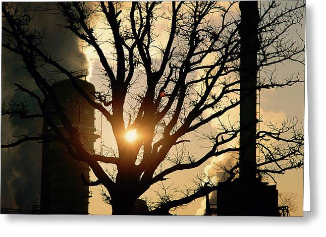 Bare Tree With Processing Plant Greeting Card by Panoramic Images