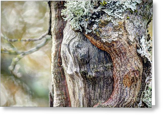 Bark And Bokeh Greeting Card by Chris Anderson