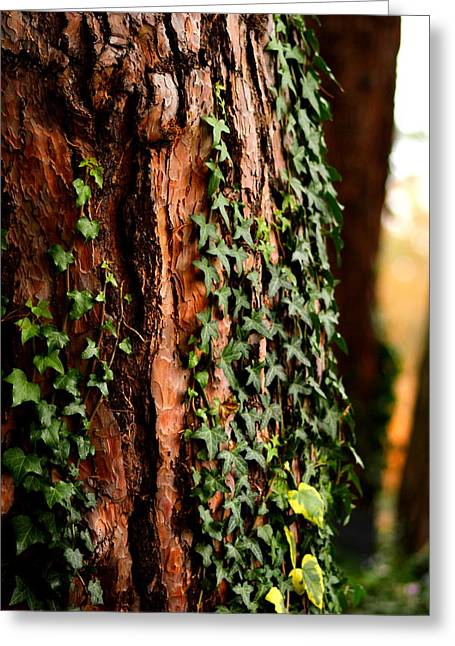 Bark And Ivy Greeting Card by Jacqui Collett