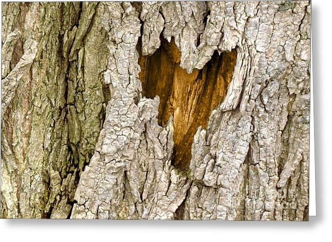 Bark Heart Greeting Card