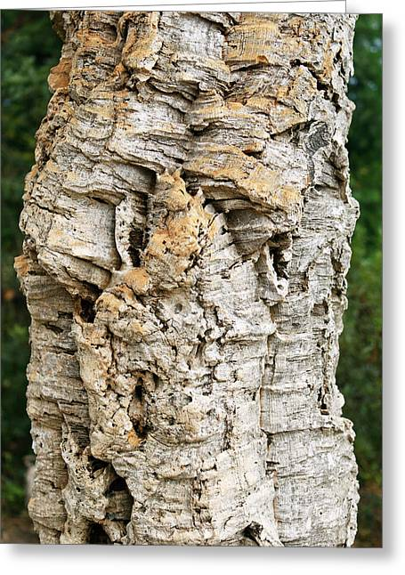 Bark Of Cork Oak (quercus Suber) Greeting Card by Dr Morley Read