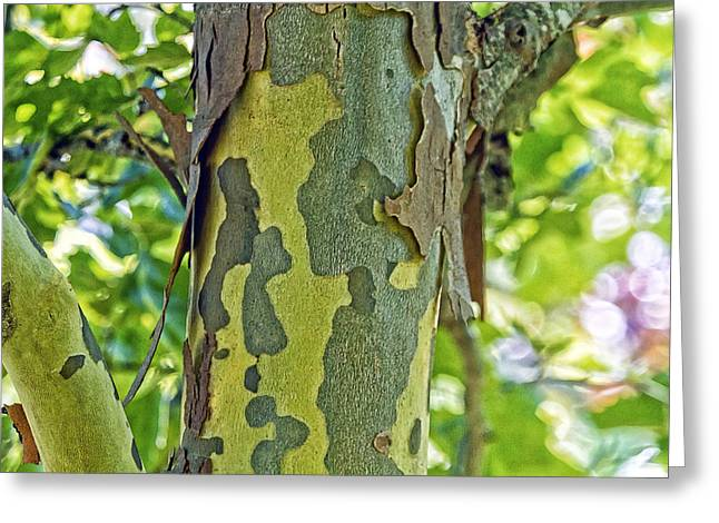 Bark Of The London Planetree Greeting Card