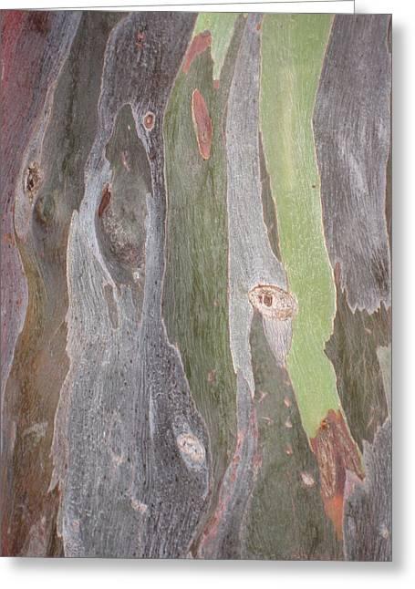 Bark Of Tree, San Juan Greeting Card
