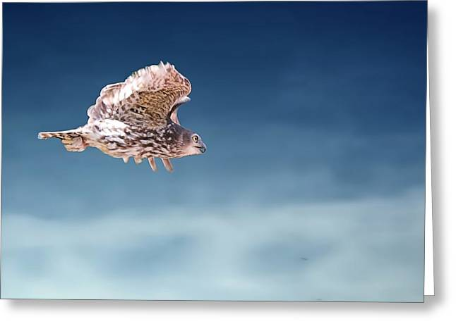 Barking Owl In Flight Greeting Card