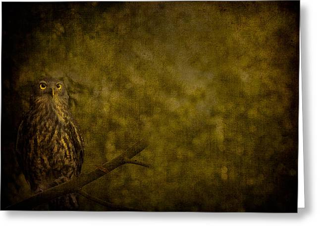 Barking Owl Greeting Card
