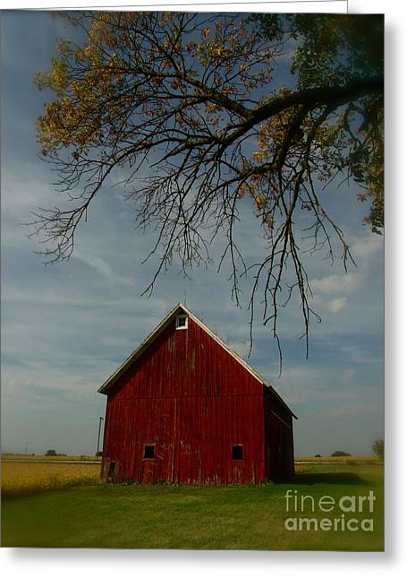 Barn And Box Elder Greeting Card