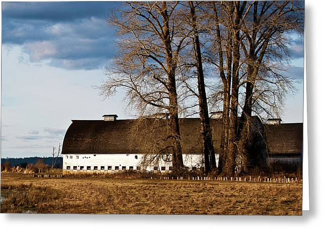 Barn And Trees Greeting Card by Ron Roberts