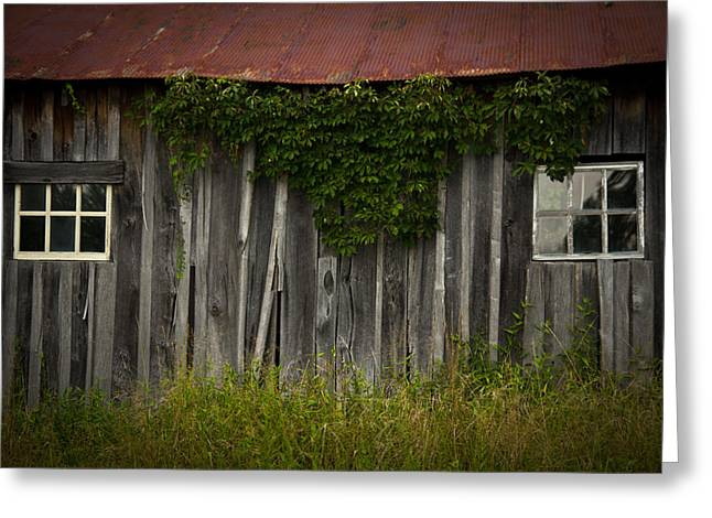 Barn Eyes Greeting Card by Shane Holsclaw