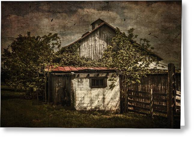 Barn In Morning Light Greeting Card by Kathy Jennings