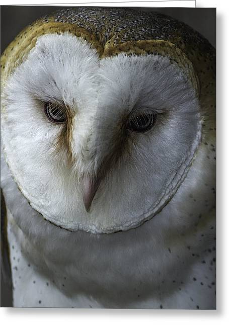Barn Owl 2014-001 Greeting Card