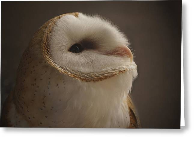 Barn Owl 4 Greeting Card