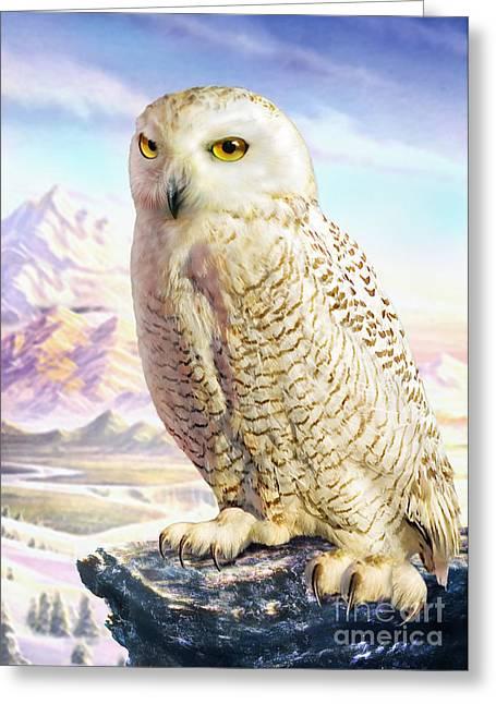 Barn Owl Greeting Card by Adrian Chesterman