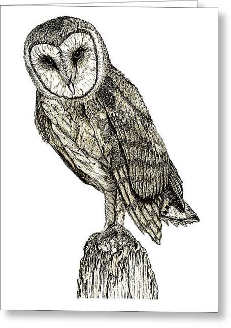 Barn Owl Greeting Card by David Blank