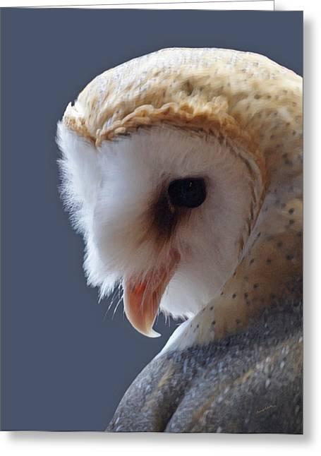 Barn Owl Dry Brushed Greeting Card by Ernie Echols