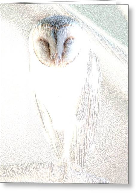 Barn Owl Greeting Card by Holly Kempe