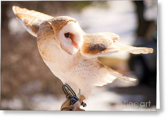 Barn Owl In The Breeze Greeting Card