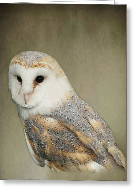 Barn Owl Greeting Card by Jacqi Elmslie