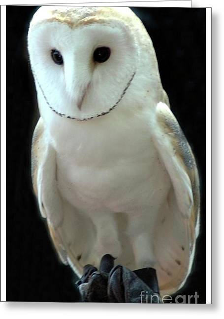 Barn Owl. Greeting Card by Kathleen Struckle