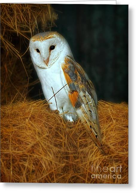 Barn Owl Greeting Card by Louise Heusinkveld