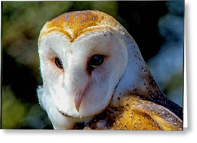 Greeting Card featuring the photograph Barn Owl Portrait by Constantine Gregory