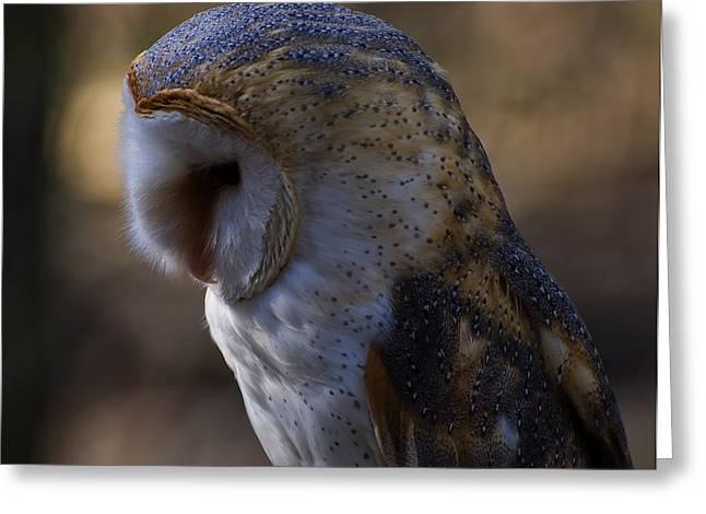 Barn Owl Profile 2 Greeting Card