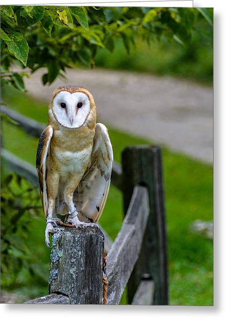 Barn Owl Greeting Card by Randy Scherkenbach