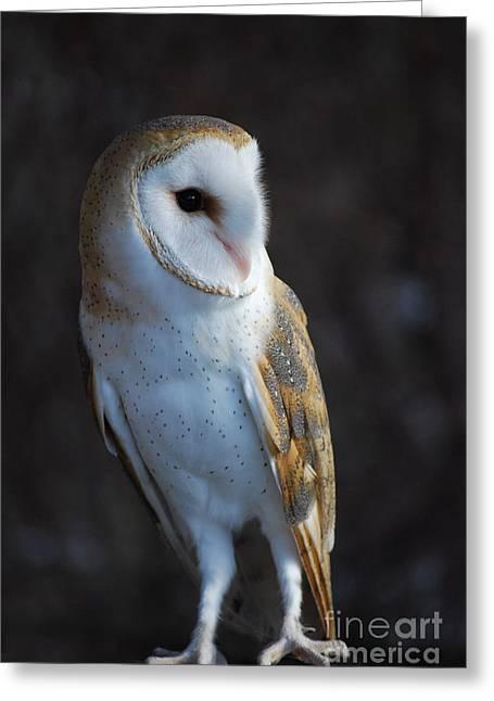 Barn Owl Greeting Card by Sharon Elliott