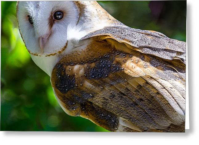 Greeting Card featuring the photograph Barn Owl by Yeates Photography