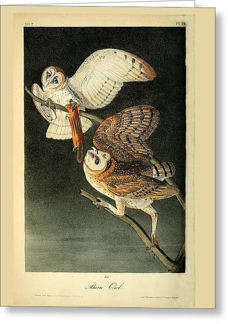 Barn Owls Greeting Card by Philip Ralley