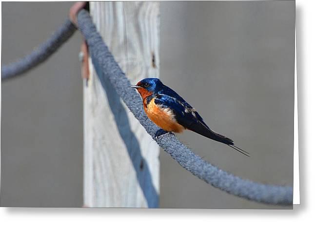 Barn Sparrow Greeting Card by Chris Tennis
