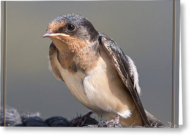 Greeting Card featuring the photograph Barn Swallow On Rope I by Patti Deters