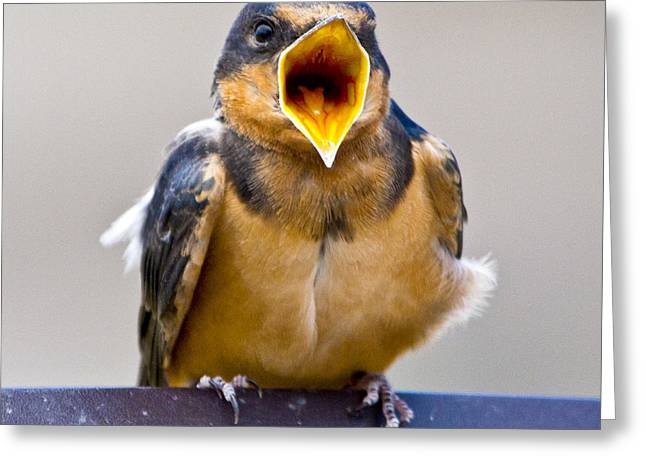 Greeting Card featuring the photograph Barn Swallow by Ricky L Jones