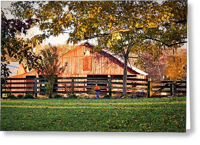 Barn Through The Trees Greeting Card by Cricket Hackmann