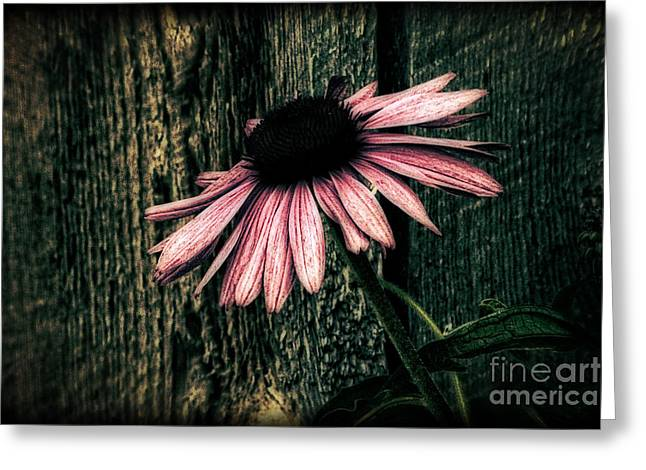 Greeting Card featuring the photograph Barnyard Coneflower by Marjorie Imbeau