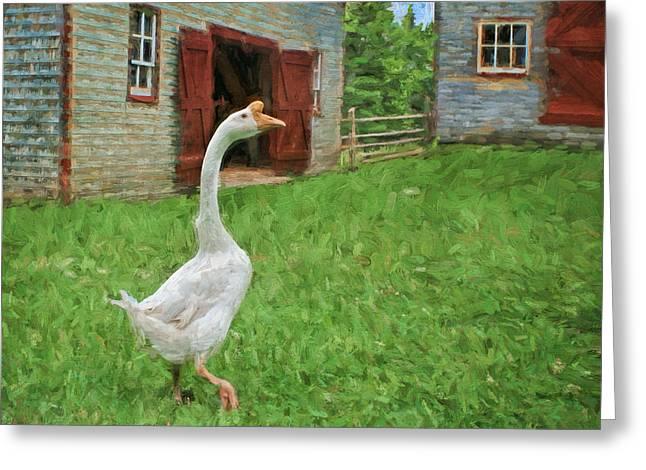 Barnyard Goose Greeting Card by Nikolyn McDonald