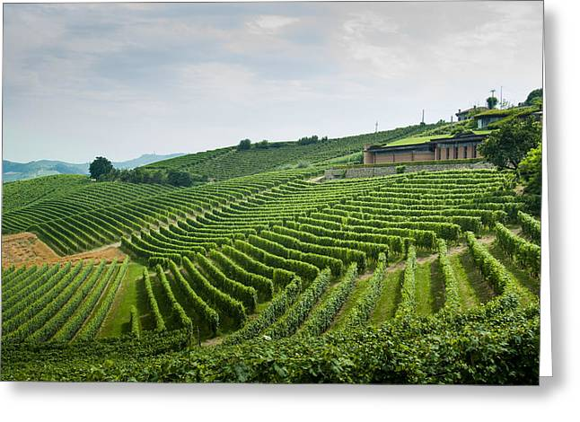 Barolo Greeting Card