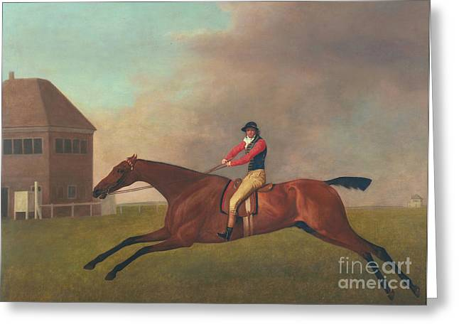 Baronet With Sam Chifney Up Greeting Card by George Stubbs