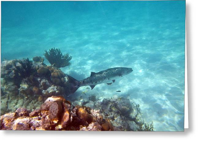 Greeting Card featuring the photograph Barracuda by Eti Reid