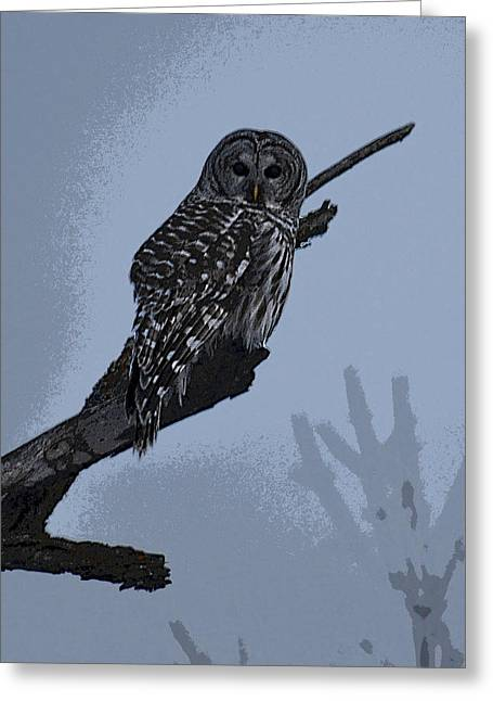 Barred Owl Art Greeting Card