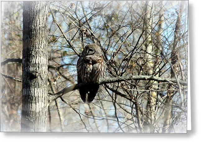 Barred Owl Greeting Card by Betty Northcutt