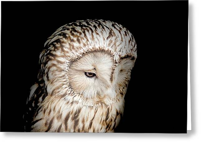 Barred Owl Greeting Card by Bill Wakeley