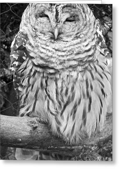 Greeting Card featuring the photograph Barred Owl In Black And White by John Telfer